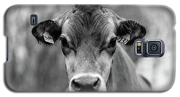 Color Galaxy S5 Case - Portrait Of A Dairy Cow In The Rain Stowe Vermont by Edward Fielding