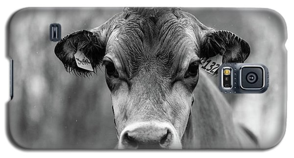 Galaxy S5 Case - Portrait Of A Dairy Cow In The Rain Stowe Vermont by Edward Fielding