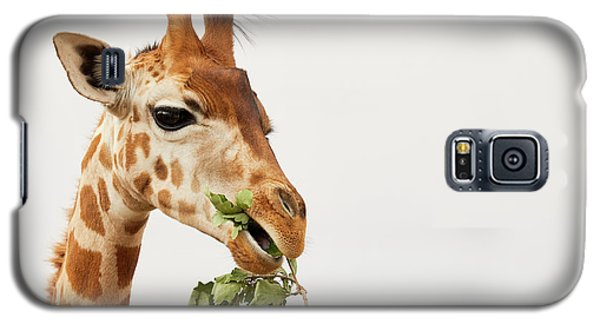 Galaxy S5 Case featuring the photograph Portrait Of A Rothschild Giraffe  by Nick Biemans