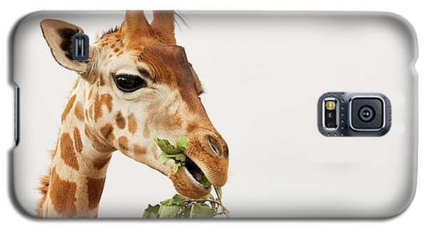 Portrait Of A Rothschild Giraffe  Galaxy S5 Case