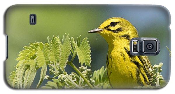 Prairie Warbler Galaxy S5 Case
