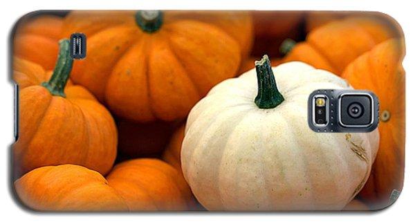 Pumpkins Galaxy S5 Case by Joseph Skompski