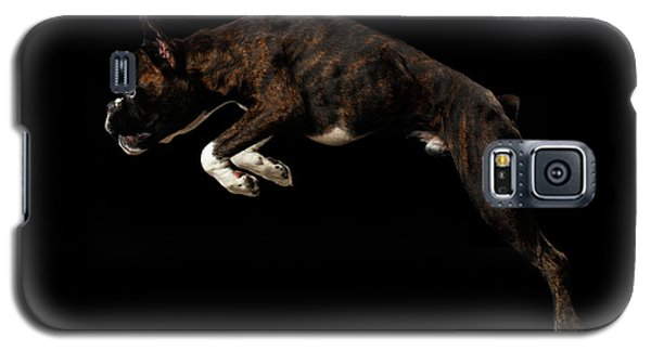 Purebred Boxer Dog Isolated On Black Background Galaxy S5 Case