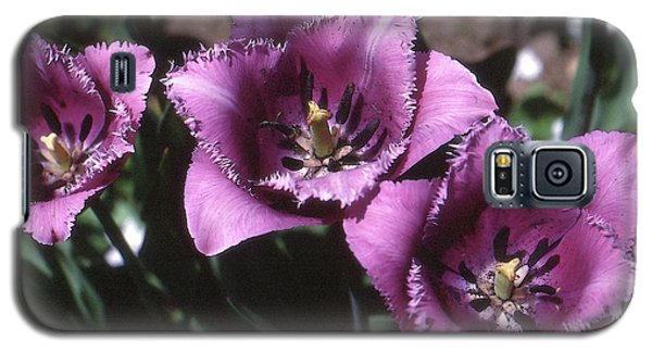 Purple Flowers Two  Galaxy S5 Case by Lyle Crump