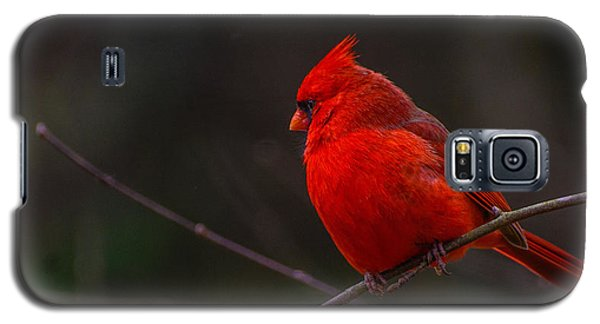 Quality Quiet Time  Galaxy S5 Case by John Harding