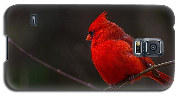 Galaxy S5 Case featuring the photograph Quality Quiet Time  by John Harding