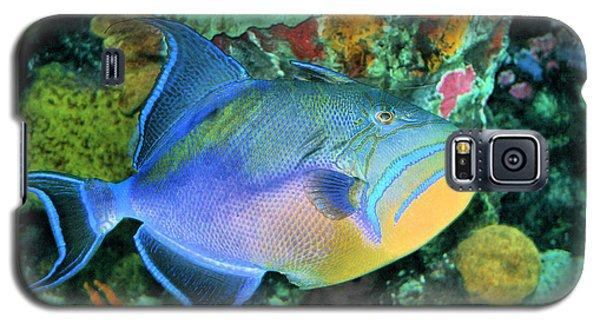 Queen Triggerfish Galaxy S5 Case