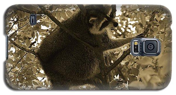 Raccoon  Galaxy S5 Case by Janice Spivey