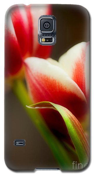 Tulip Galaxy S5 Case - Red And White Tulips by Nailia Schwarz