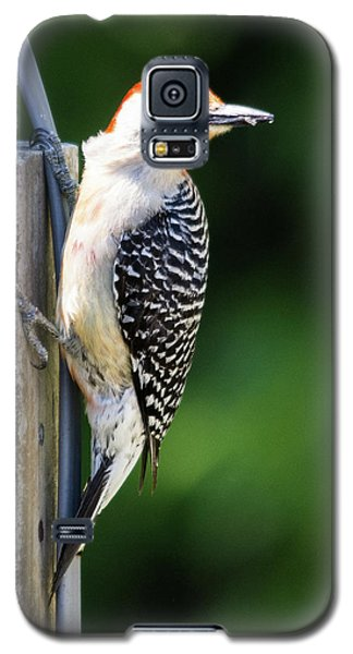 Red-bellied Woodpecker Galaxy S5 Case