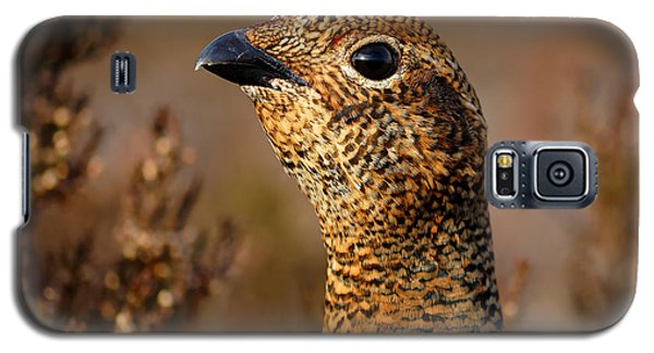 Red Grouse  Galaxy S5 Case