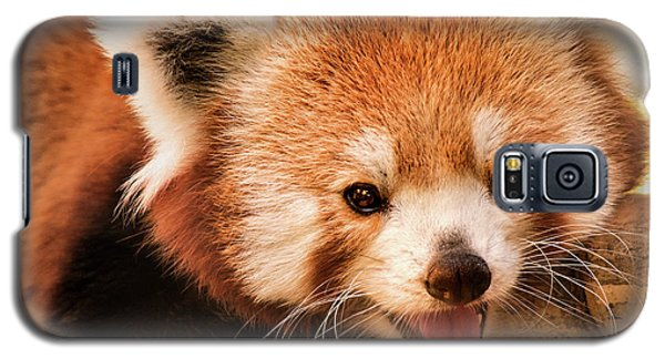Red Panda Galaxy S5 Case
