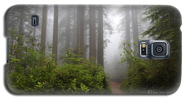 Redwood Grove Galaxy S5 Case