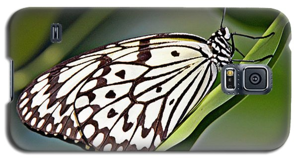 Rice Paper Butterfly 8 Galaxy S5 Case