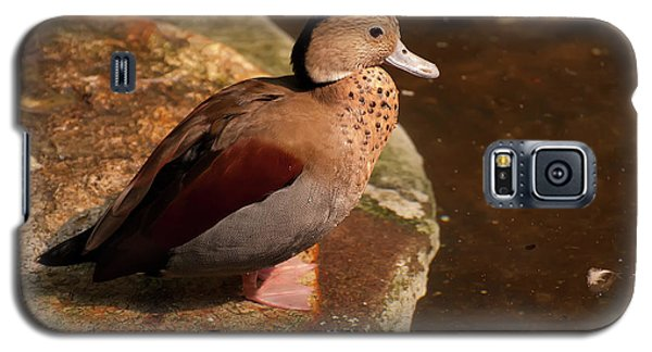 Ringed Teal On A Rock Galaxy S5 Case by Chris Flees