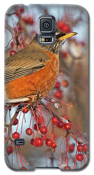 Galaxy S5 Case featuring the photograph Robin.. by Nina Stavlund