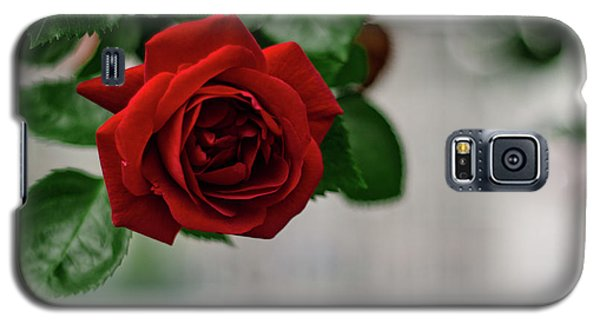 Roses In The City Park Galaxy S5 Case