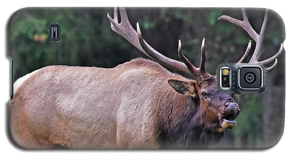 Royal Roosevelt Bull Elk Galaxy S5 Case