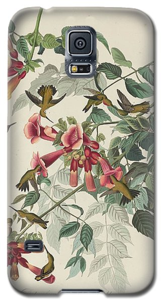 Ruby-throated Hummingbird Galaxy S5 Case by Rob Dreyer