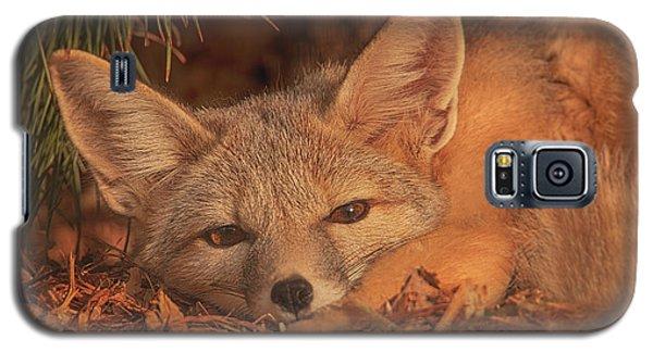 San Joaquin Kit Fox  Galaxy S5 Case by Brian Cross