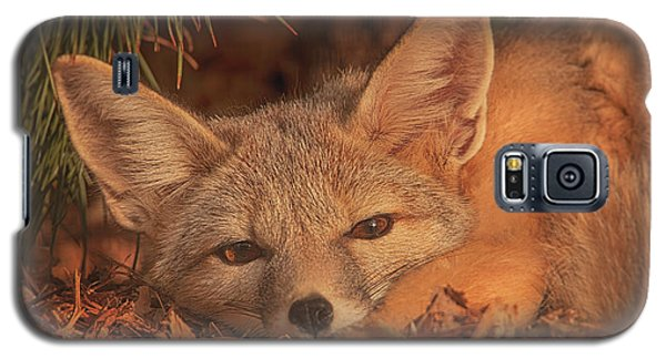 San Joaquin Kit Fox  Galaxy S5 Case