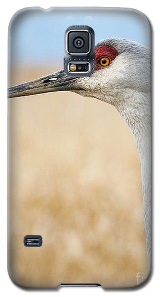 Sandhill Crane Galaxy S5 Case by Chris Dutton