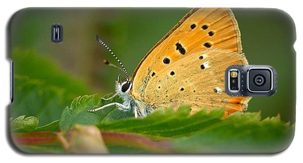 Galaxy S5 Case featuring the photograph Scarce Copper by Jouko Lehto