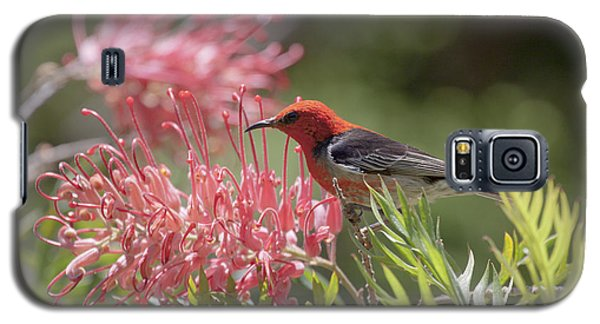 Scarlet Honeyeater Galaxy S5 Case