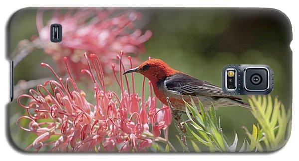 Scarlet Honeyeater Galaxy S5 Case
