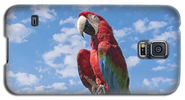 Macaw Galaxy S5 Case - Scarlet Macaw by Kim Hojnacki