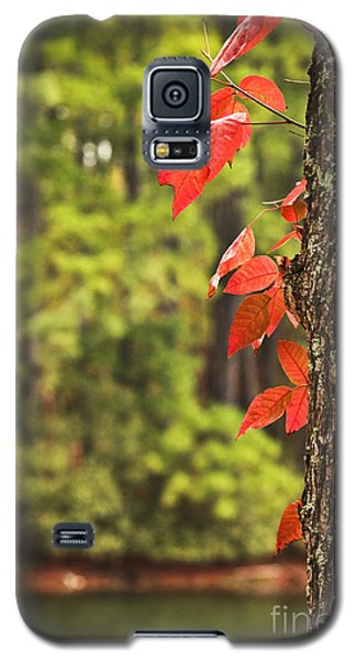 Scenic Elder Lake Galaxy S5 Case
