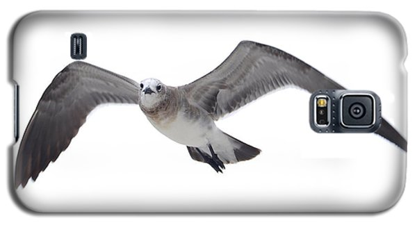 Sea Gull Galaxy S5 Case