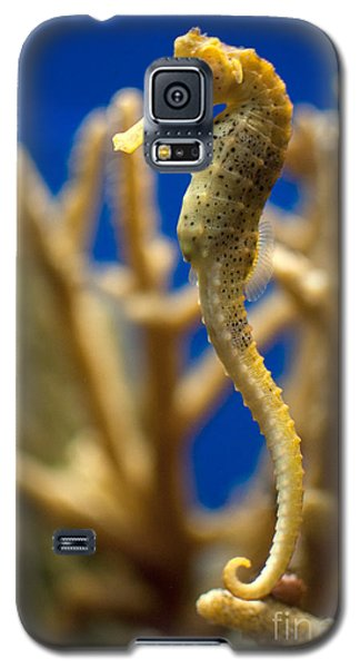 Sea Horses Galaxy S5 Case by Carol Ailles