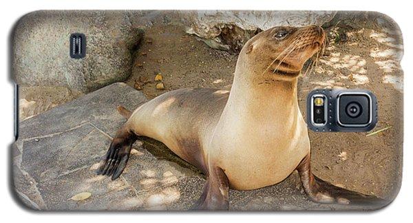 Sea Lion On The Beach, Galapagos Islands Galaxy S5 Case by Marek Poplawski