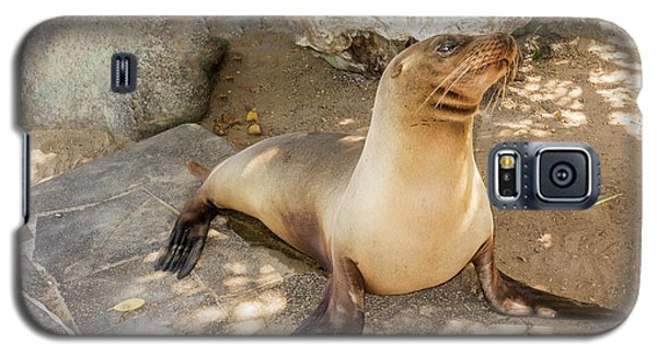 Sea Lion On The Beach, Galapagos Islands Galaxy S5 Case
