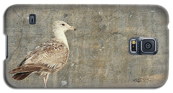 Seagull - Jersey Shore Galaxy S5 Case