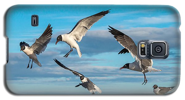 Seagulls In Flight Galaxy S5 Case