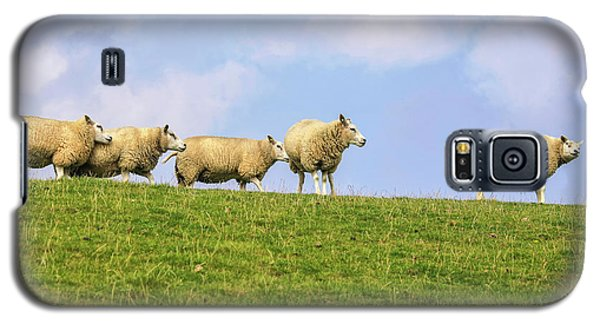 Galaxy S5 Case featuring the photograph Sheep On Dyke by Patricia Hofmeester