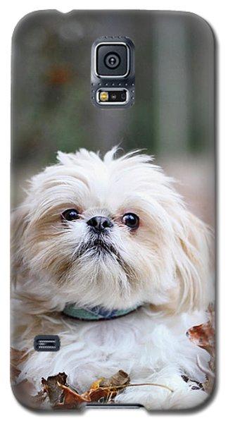Shih Tzu Galaxy S5 Case