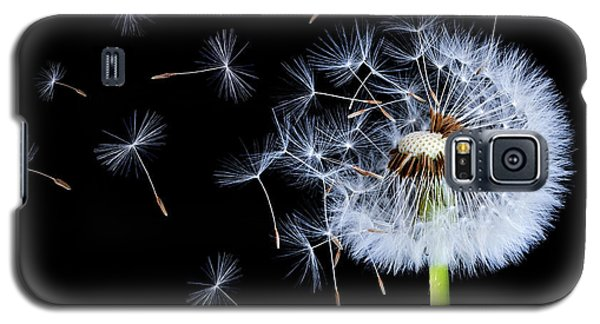 Silhouettes Of Dandelions Galaxy S5 Case