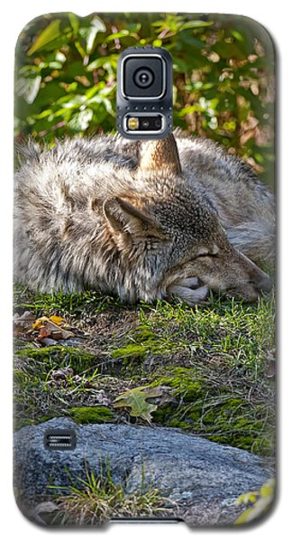Galaxy S5 Case featuring the photograph Sleeping Timber Wolf by Michael Cummings