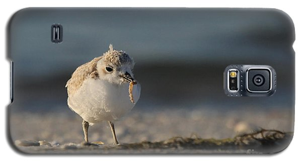 Snowy Plover Galaxy S5 Case by Meg Rousher