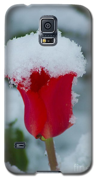 Snowy Red Riding Hood Galaxy S5 Case
