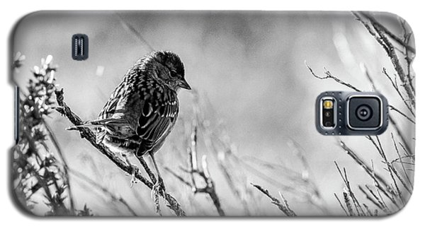 Snarky Sparrow, Black And White Galaxy S5 Case