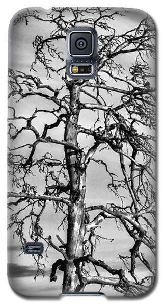 Still Standing - Black Edition Galaxy S5 Case