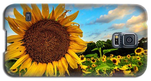 Summer Suns  Galaxy S5 Case