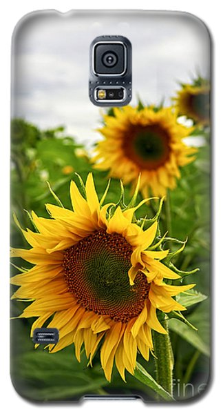 Sunflower Field Galaxy S5 Case