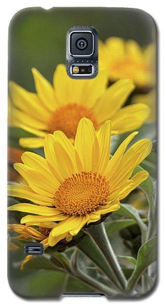 Galaxy S5 Case featuring the photograph Sunflowers  by Saija Lehtonen
