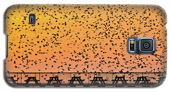 Sunset And Starlings In Aberystwyth Wales Galaxy S5 Case