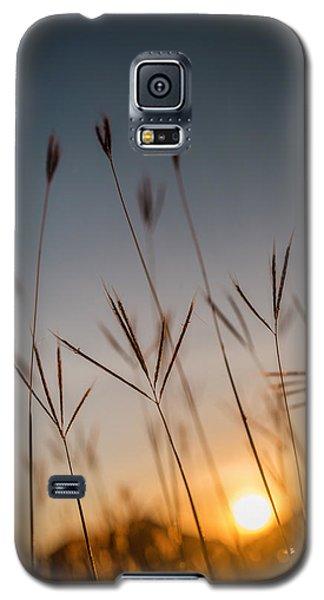 Sunset Grass Galaxy S5 Case